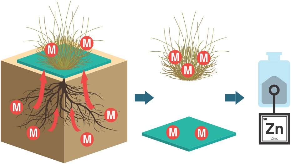 Diagram of metal in contaminated soil moving from plant roots up to soil surface and being captured in a square hydrogel mat surrounding the plant.