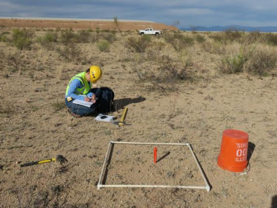 Photo of scientist collecting revegetation data with sampling quad.
