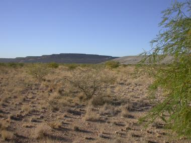 Photo of revegetated tailings facility with mesquites/acacias.