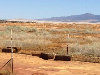 Photo of successful revegetation on compost-amended, highly pyritic, metal(loid) contaminated mine tailings at the Iron King Mine Federal Superfund site in Dewey-Humboldt, Arizona.